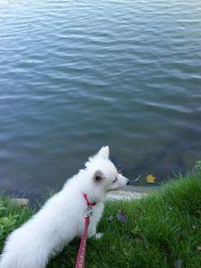 W pewnym momencie nie mogłam go uspokoić, tak bardzo chciał do wody!