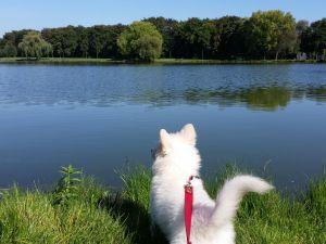 Pierwszy ciut dłuższy spacer i ogromne zainteresowanie Lena wodą...