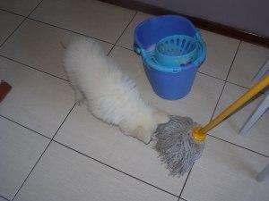 Len i tak sam po sobie posprząta...