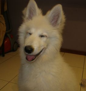 nie ma to jak pstryknąć zdjęcie w dobrym momencie i wyszedł pies -Azjata :D
