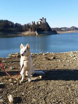 niski poziom wody przy tamie i zamek w Niedzicy w tle :D