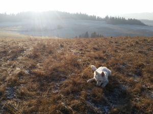 Spacer po wzgórzach i pastwiskach, piękne miejsce idealne na wędrówki!